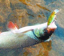 либерти рыбалка