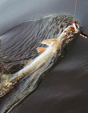 В поисках рыболовного Эльдорадо